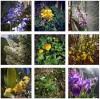 Fleurs Instagram, mai 2020