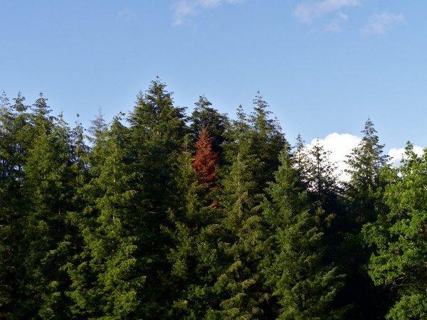Des arbres, sept. 2020