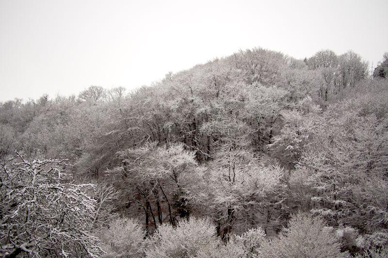 Forêt poivre et sel