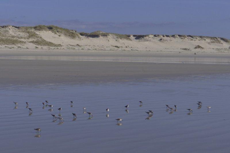 Des oiseaux et des dunes